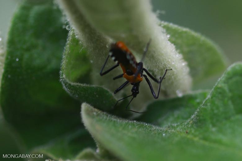 orange and black bug madagascar 3755. Black Bedroom Furniture Sets. Home Design Ideas