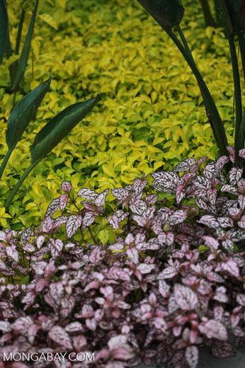 Plants [madagascar_5186]