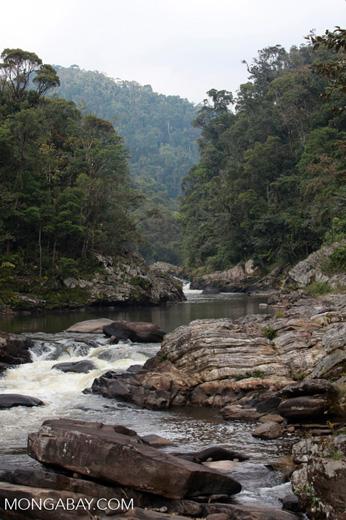 Namorona River in Ranomafana [madagascar_5226]
