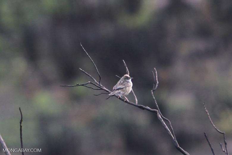 bird [madagascar_6368]
