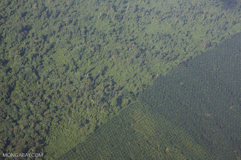 Aerial view of an oil palm plantation and a heavily logged natural forest
