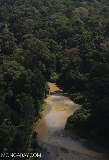 Danum river in Borneo