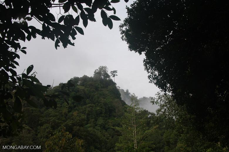 Borneo rain forest -- borneo_4288