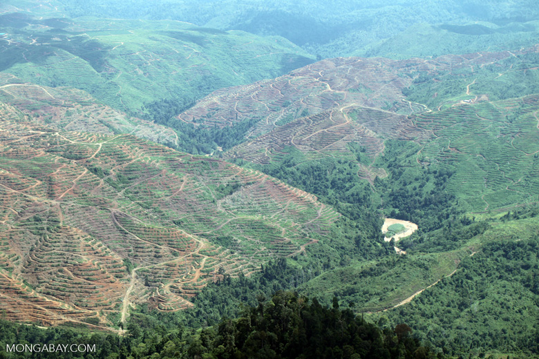 Deforestation in Sabah, Malaysia