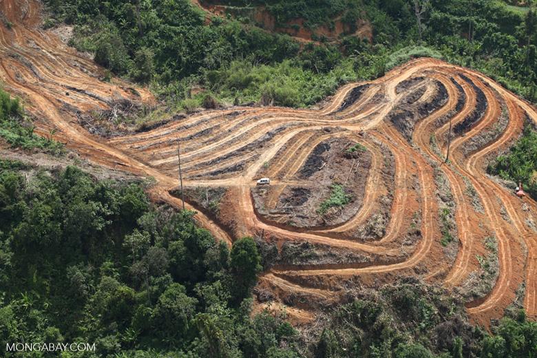 Deforestation for oil palm -- sabah_1108