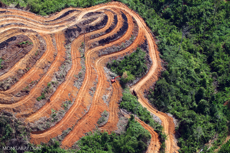 deforestation of the rainforest essay English essays: deforestation deforestation this essay deforestation and other 63,000+ term papers, college essay examples and free essays are available now on reviewessayscom.