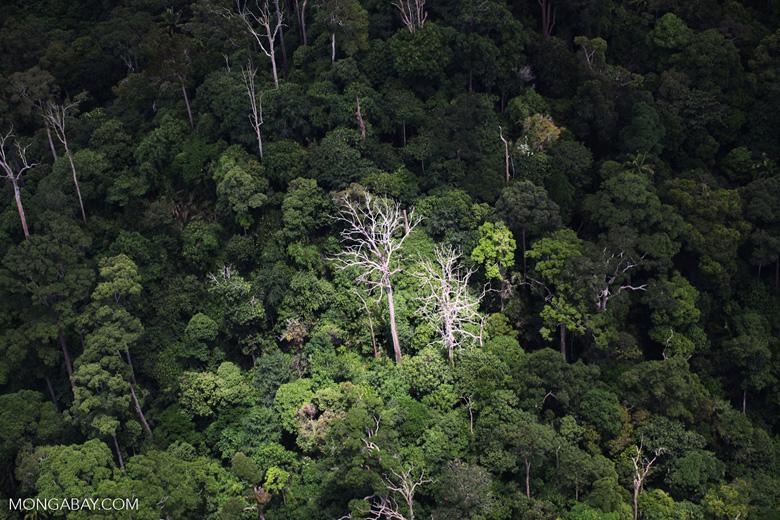 Jungle in Borneo