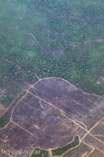 Deforestation in Borneo -- sabah_2520