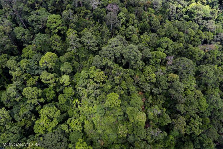 Rainforest in Borneo -- sabah_aerial_0334