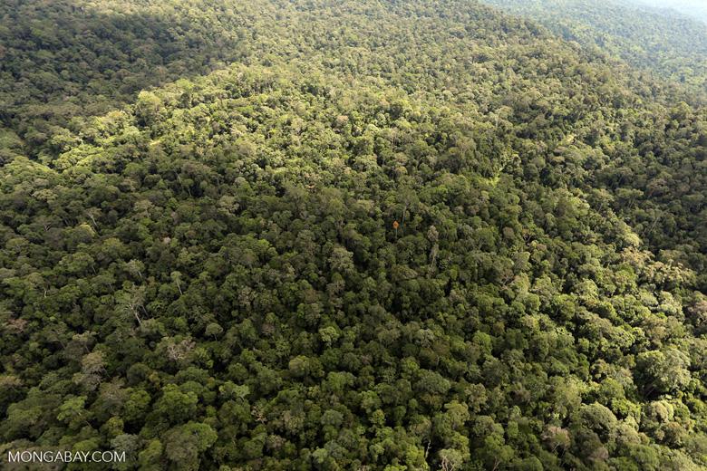 Borneo rainforest -- sabah_aerial_1043