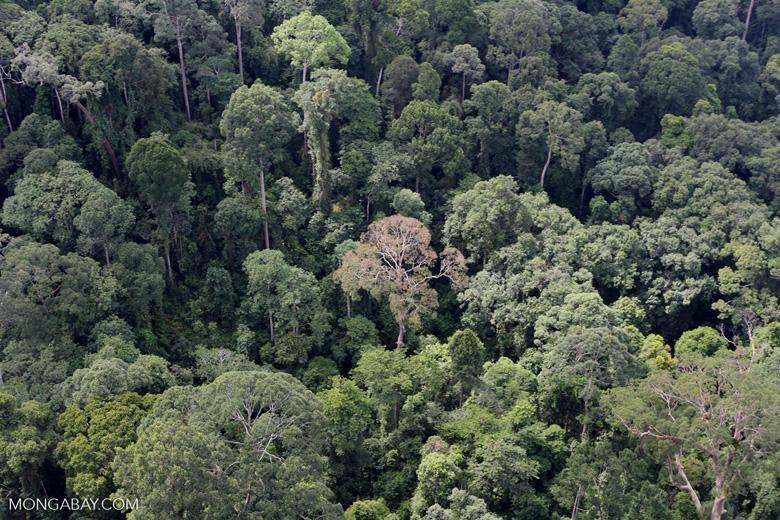 Borneo rainforest -- sabah_aerial_2540
