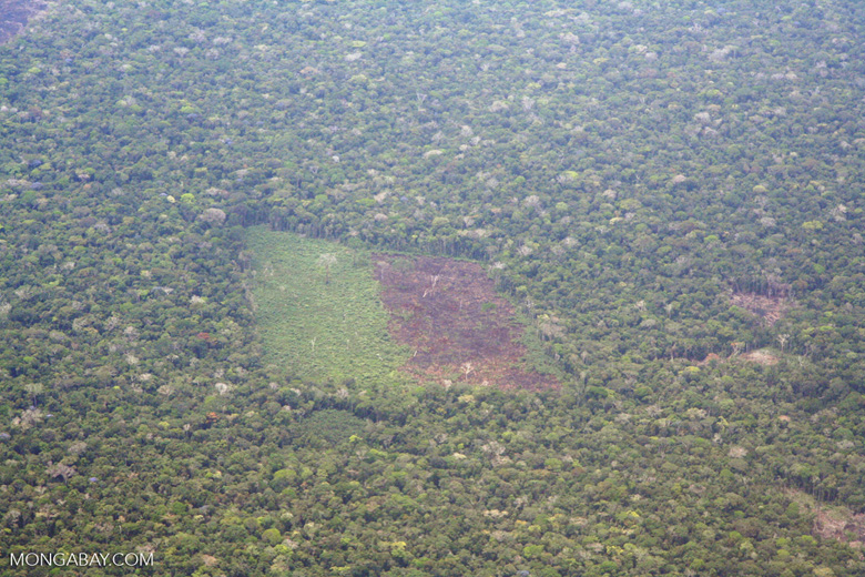 Aerial view of deforestation in the Amazon