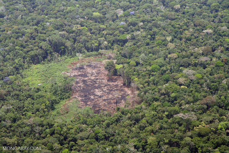 Plane view of deforestation in the Amazon