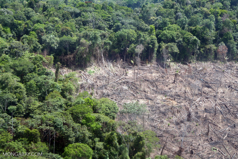 Overhead view of clear-cutting for slash-and-burn agriculture in the Peruvian Amazon