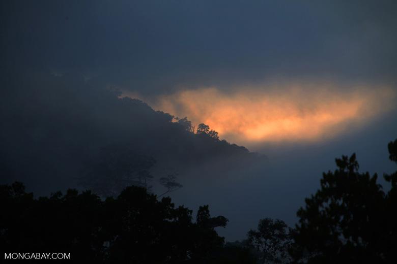 Moisture transpiring from the Amazon rainforest at sunset