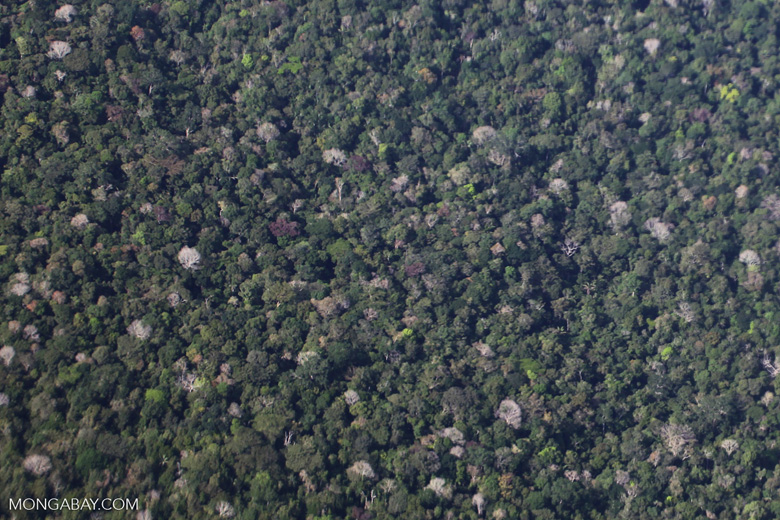 Overhead view of the Amazon rainforest canopy