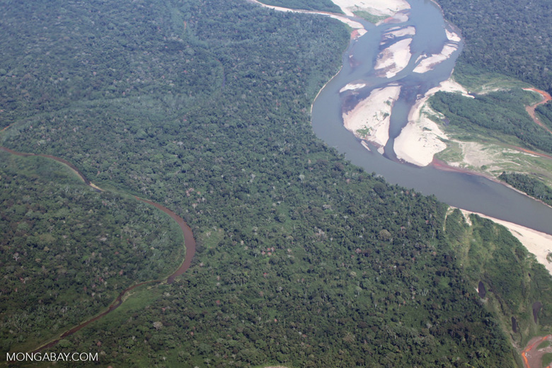 Lowland Amazon forest