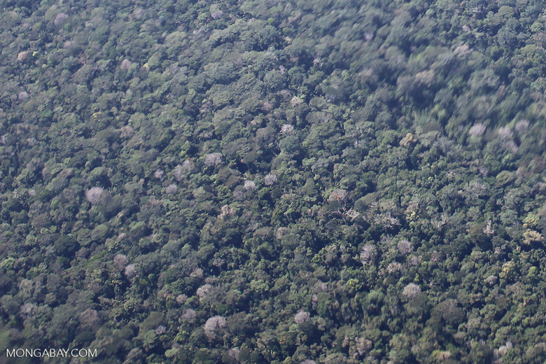 Amazon rainforest as seen from an airplane