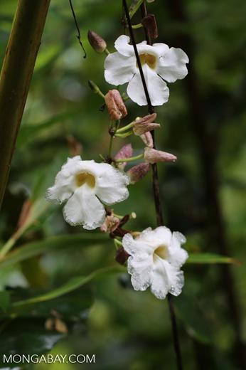 White Flowers In Hawaii