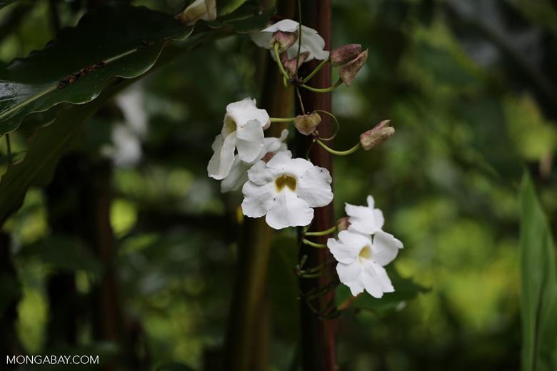 White flowers in hawaii mightylinksfo