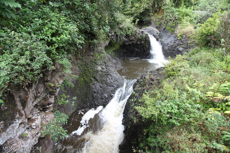 Waterfall on Oheo stream