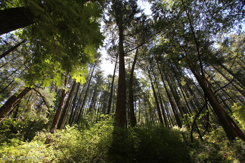 Forest along the Oredson-Todd Woods trail