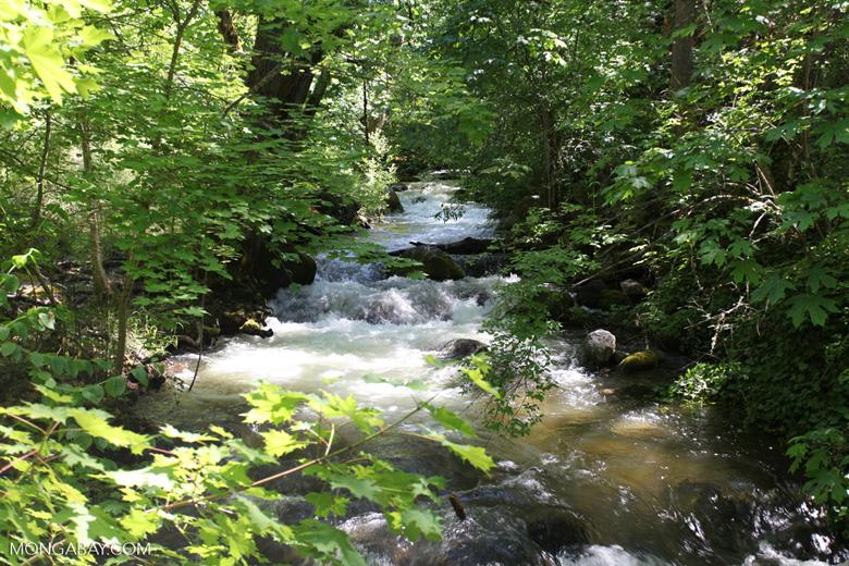 Creek in Lithia Park, Ashland