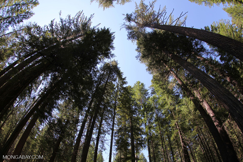 Forest in Crater Lake National Park