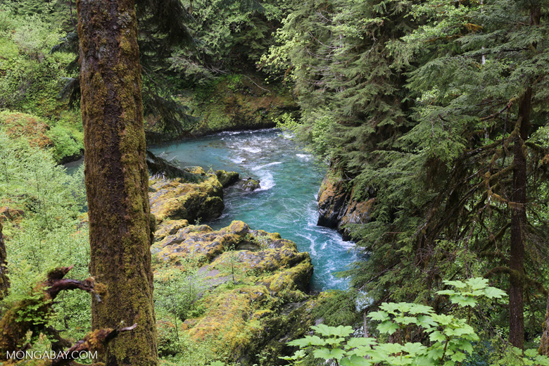Turquoise river in the rainforest (photo)