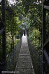 Hanging bridges canopy walkway [costa-rica-d_0168]