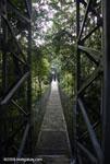 Hanging bridges canopy walkway [costa-rica-d_0169]