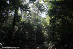Osa peninsula forest
