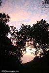Rainforest sunset [costa-rica-d_0335]