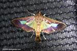 Strange moth