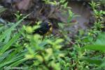 Bird [costa-rica_0470]