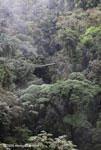 Canopy walkway [costa-rica_0807]