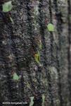 Leaf-cutter ants [costa-rica_0831]