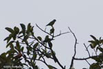 bird [costa-rica_1226]