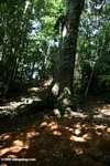 Leaf-cutter ant nest [costa_rica_5428]