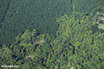 Airplane view of palm oil in Costa Rica