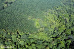 Aerial view of rainforest and oil palm plantations