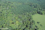 Aerial view of rainforest and oil palm plantations in Costa Rica [costa_rica_aerial_0157]