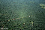 Oil palm plantation in Costa Rica [costa_rica_aerial_0200]