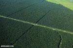 Oil palm plantation in Costa Rica [costa_rica_aerial_0240]