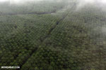 Oil palm plantation in Costa Rica [costa_rica_aerial_0432]