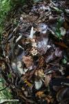 Seed pods [costa_rica_la_selva_0012]