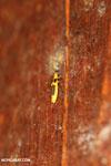 Bug [costa_rica_la_selva_0821]