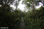 Canopy walkway [costa_rica_la_selva_0855]