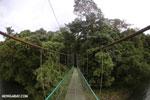 Canopy walkway [costa_rica_la_selva_0861]