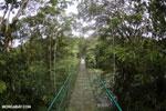 Canopy walkway [costa_rica_la_selva_0864]